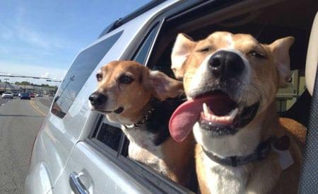 Такси и транспортные услуги для кошек и собак