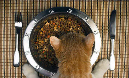 Как влияет стресс и качество питания на здоровье кошек?