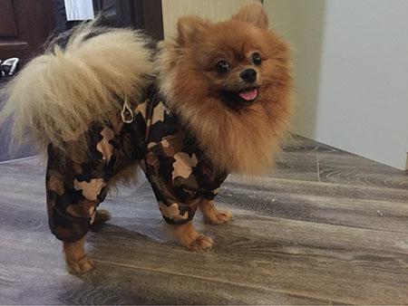 Собачьи фобии одежды! Миссия: одеть собаку!