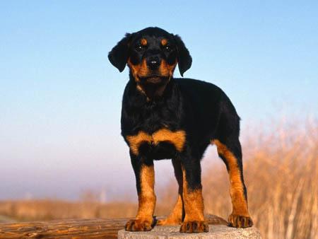 Современные требования к питанию собак: углубленное погружение