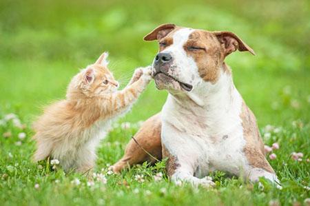 Обезвоживание у кошек и собак