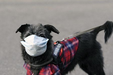 Может ли ваша собака получать и передавать коронавирус COVID 19